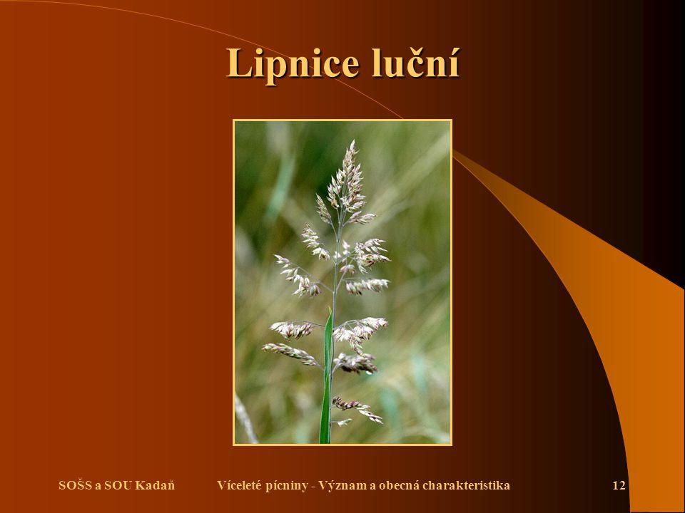 Víceleté pícniny - Význam a obecná charakteristika