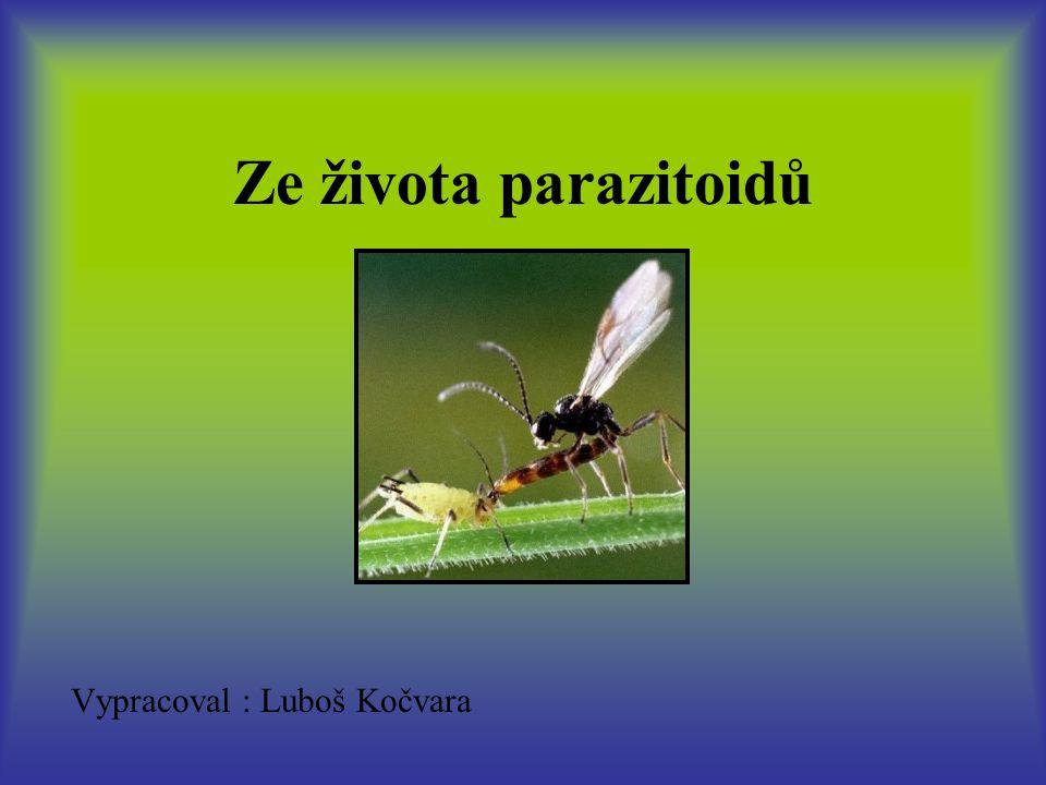 Vypracoval : Luboš Kočvara