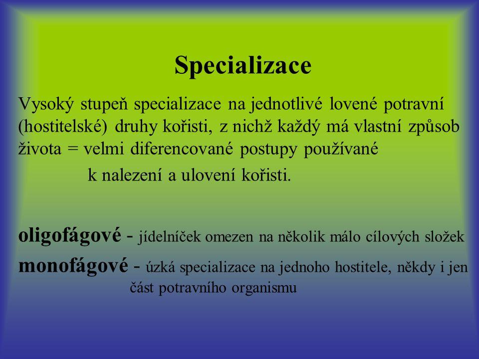 Specializace