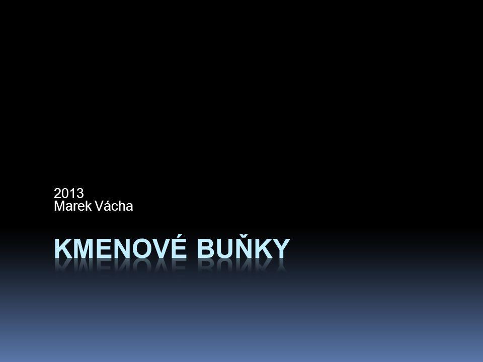 2013 Marek Vácha Kmenové buňky