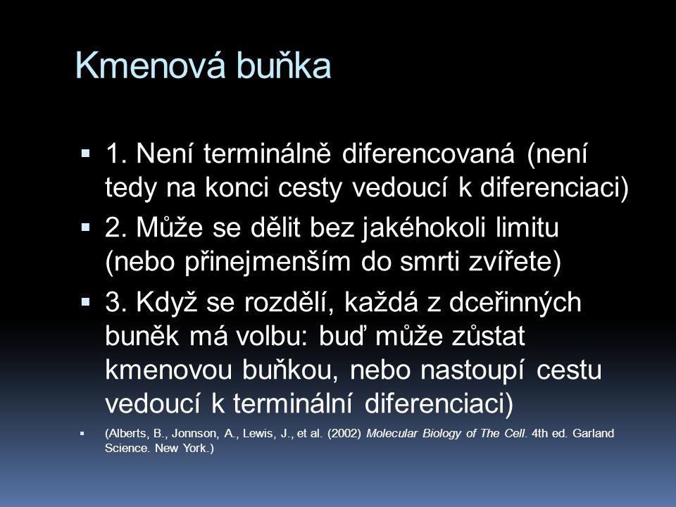 Kmenová buňka 1. Není terminálně diferencovaná (není tedy na konci cesty vedoucí k diferenciaci)