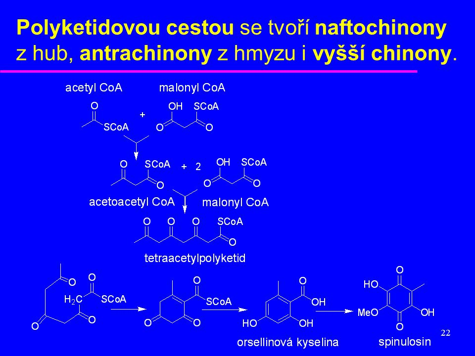 Polyketidovou cestou se tvoří naftochinony z hub, antrachinony z hmyzu i vyšší chinony.