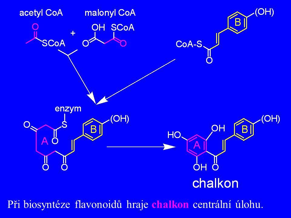 Při biosyntéze flavonoidů hraje chalkon centrální úlohu.