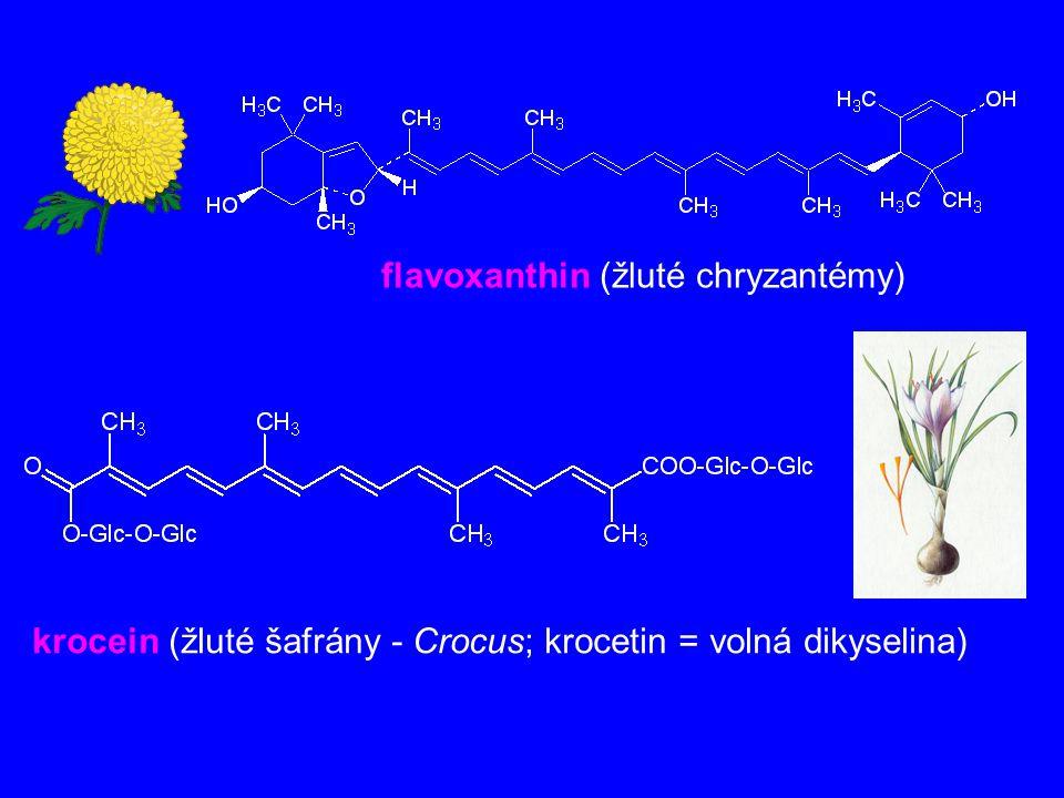 flavoxanthin (žluté chryzantémy)
