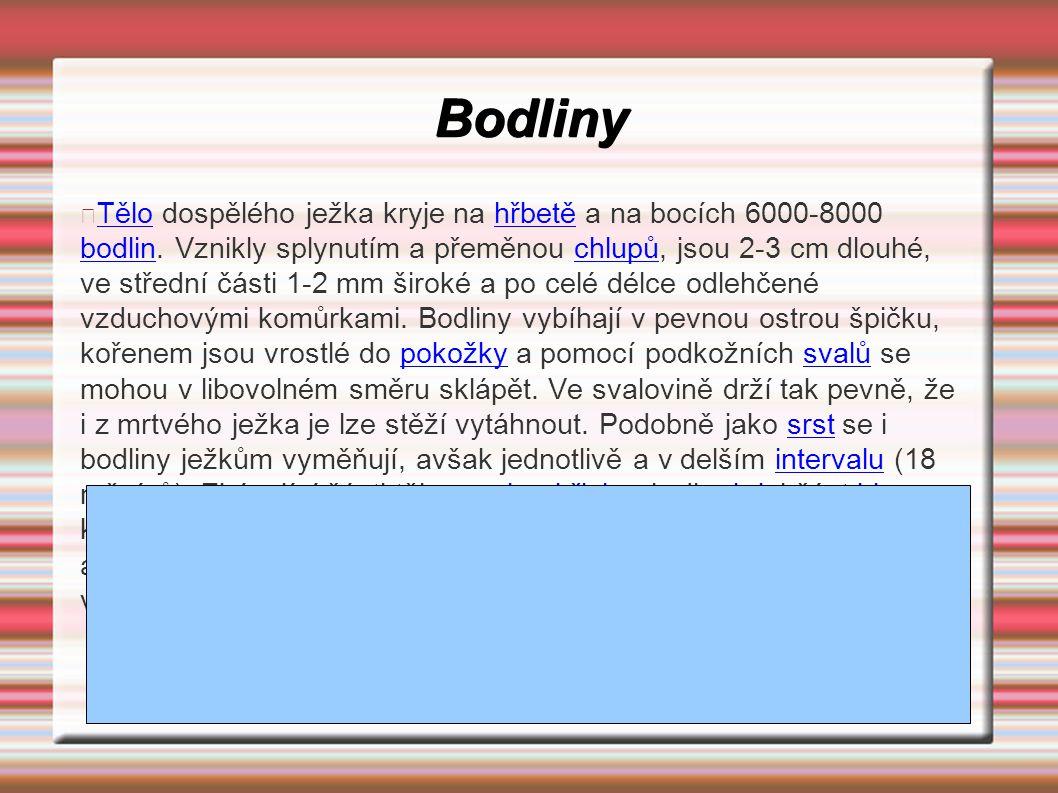 Bodliny