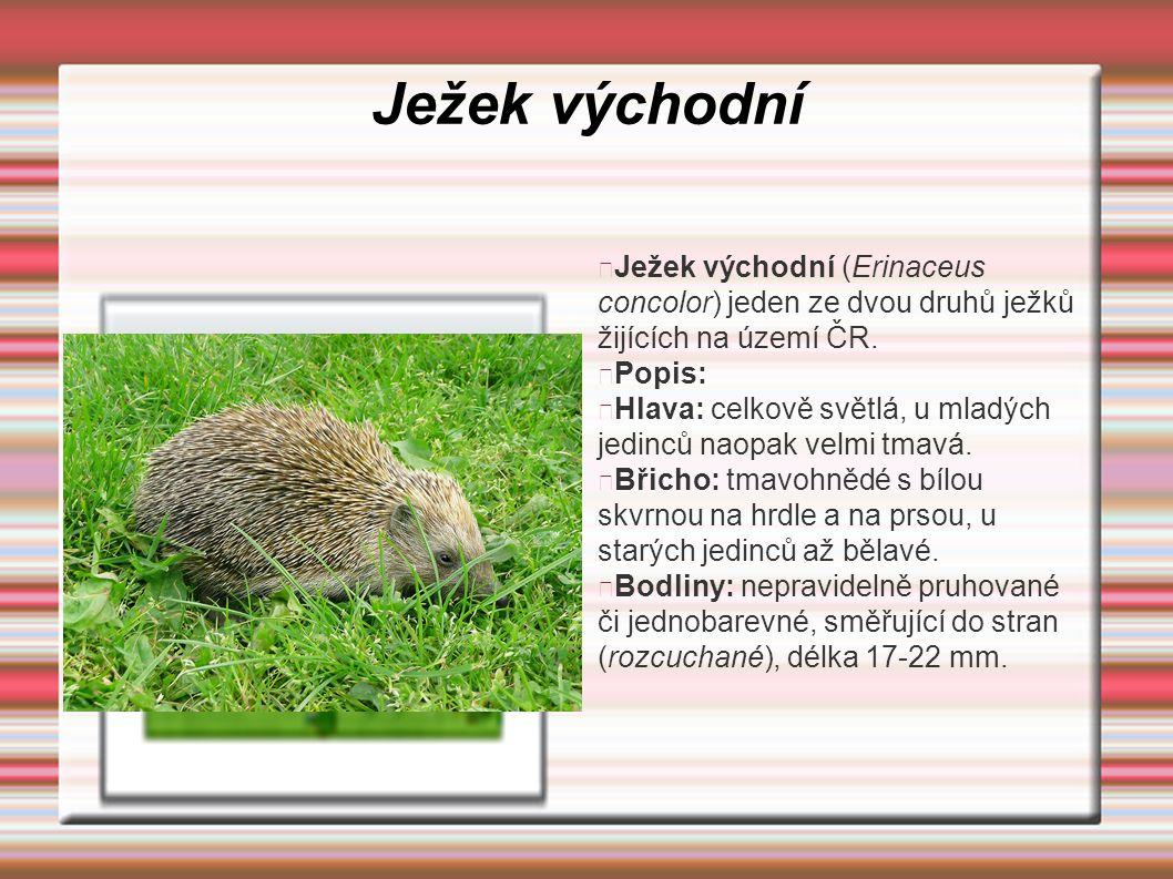 Ježek východní Ježek východní (Erinaceus concolor) jeden ze dvou druhů ježků žijících na území ČR. Popis: