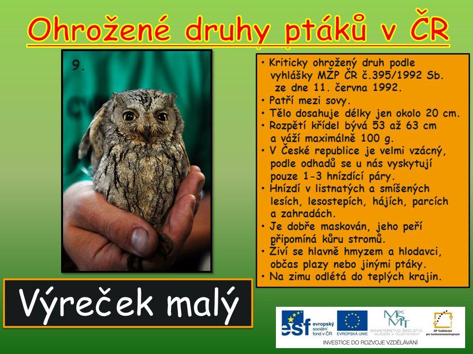 Ohrožené druhy ptáků v ČR