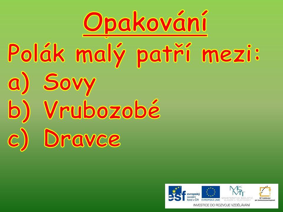 Opakování Polák malý patří mezi: Sovy Vrubozobé Dravce