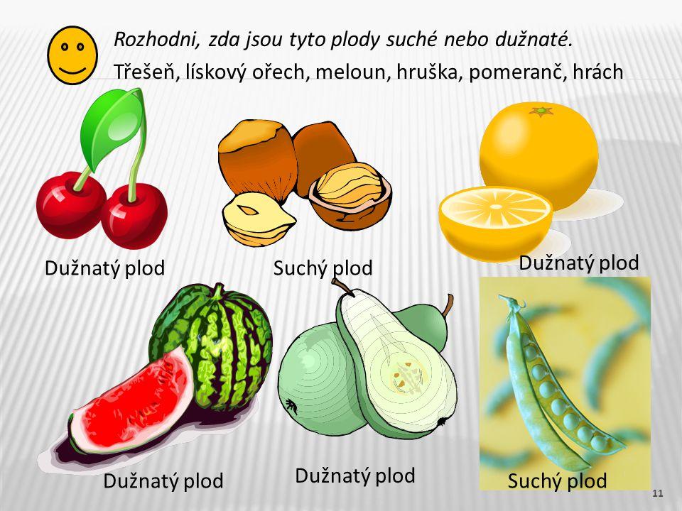 Rozhodni, zda jsou tyto plody suché nebo dužnaté