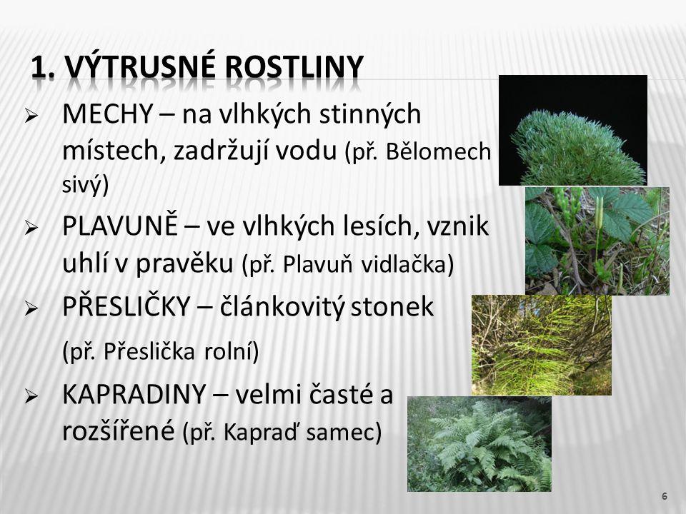 1. Výtrusné rostliny MECHY – na vlhkých stinných místech, zadržují vodu (př. Bělomech sivý)