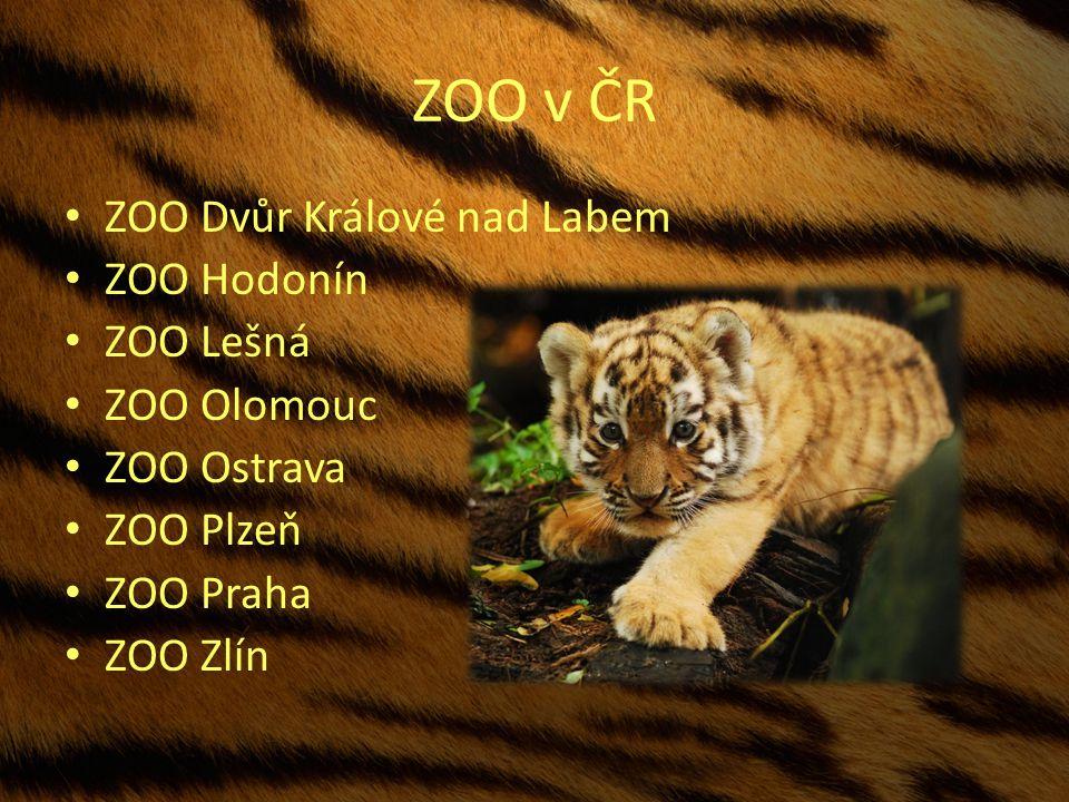 ZOO v ČR ZOO Dvůr Králové nad Labem ZOO Hodonín ZOO Lešná ZOO Olomouc