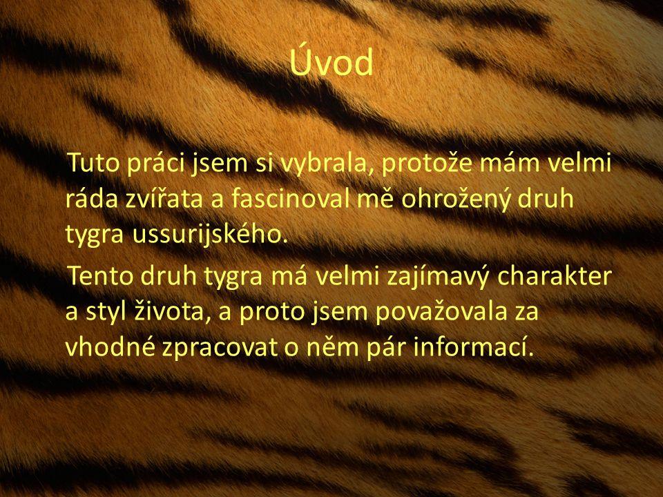 Úvod Tuto práci jsem si vybrala, protože mám velmi ráda zvířata a fascinoval mě ohrožený druh tygra ussurijského.