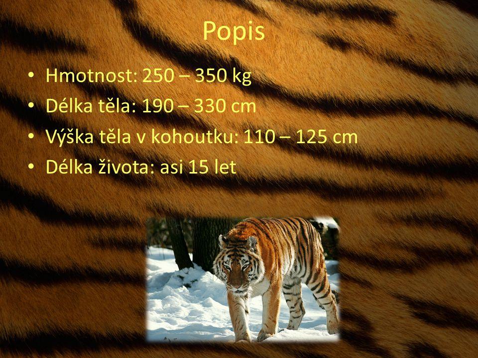 Popis Hmotnost: 250 – 350 kg Délka těla: 190 – 330 cm