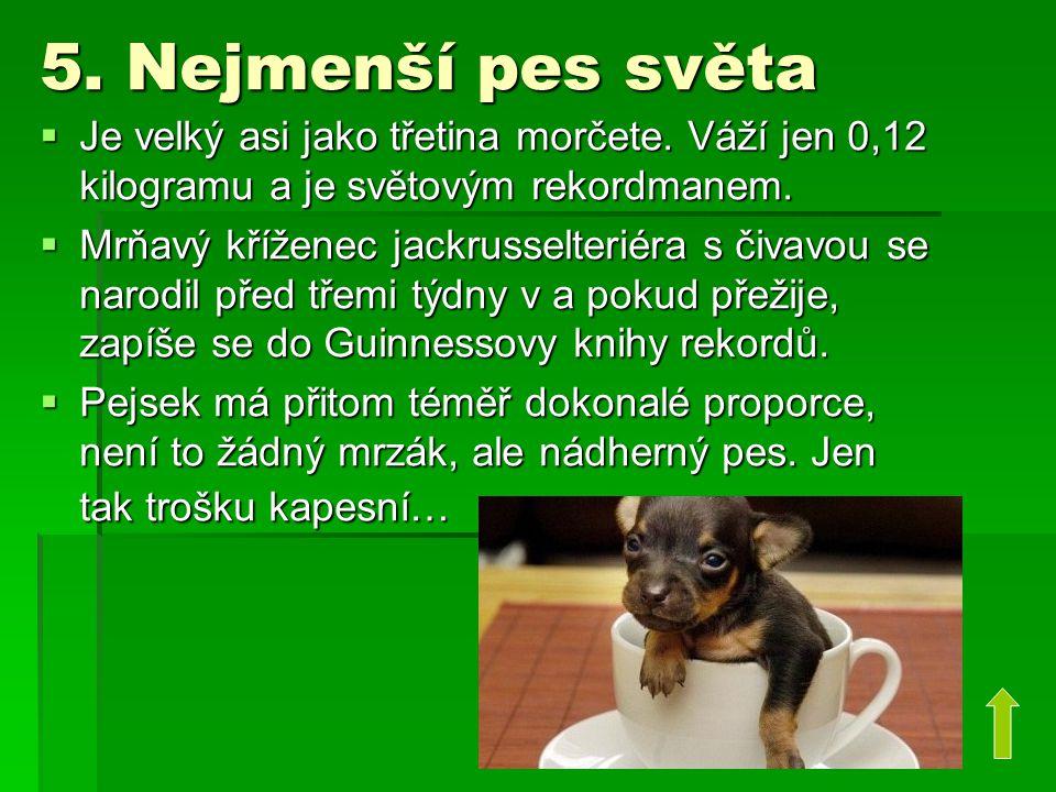 5. Nejmenší pes světa Je velký asi jako třetina morčete. Váží jen 0,12 kilogramu a je světovým rekordmanem.