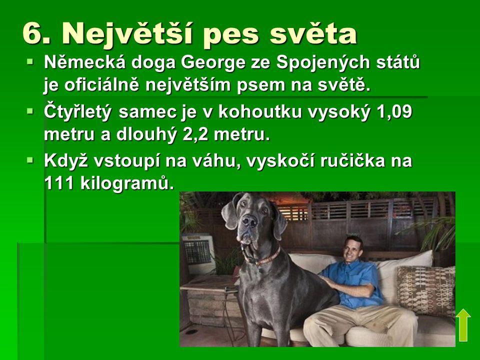 6. Největší pes světa Německá doga George ze Spojených států je oficiálně největším psem na světě.
