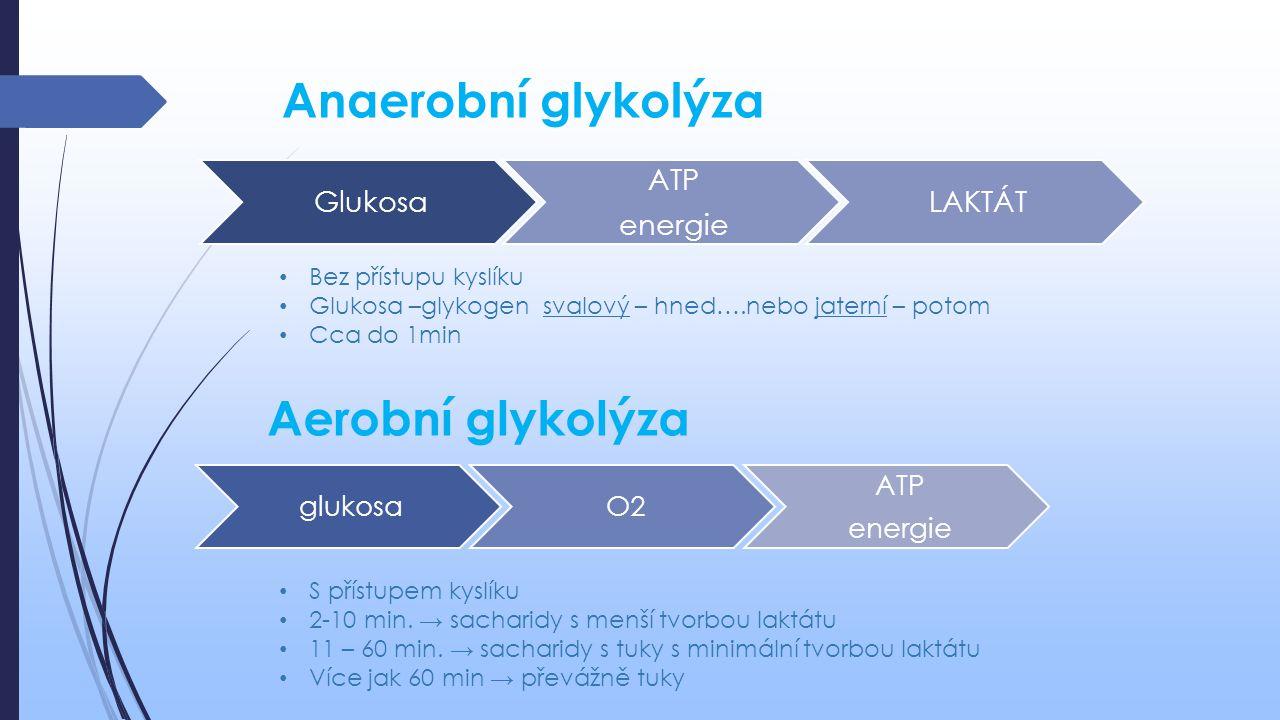 Anaerobní glykolýza Aerobní glykolýza Bez přístupu kyslíku