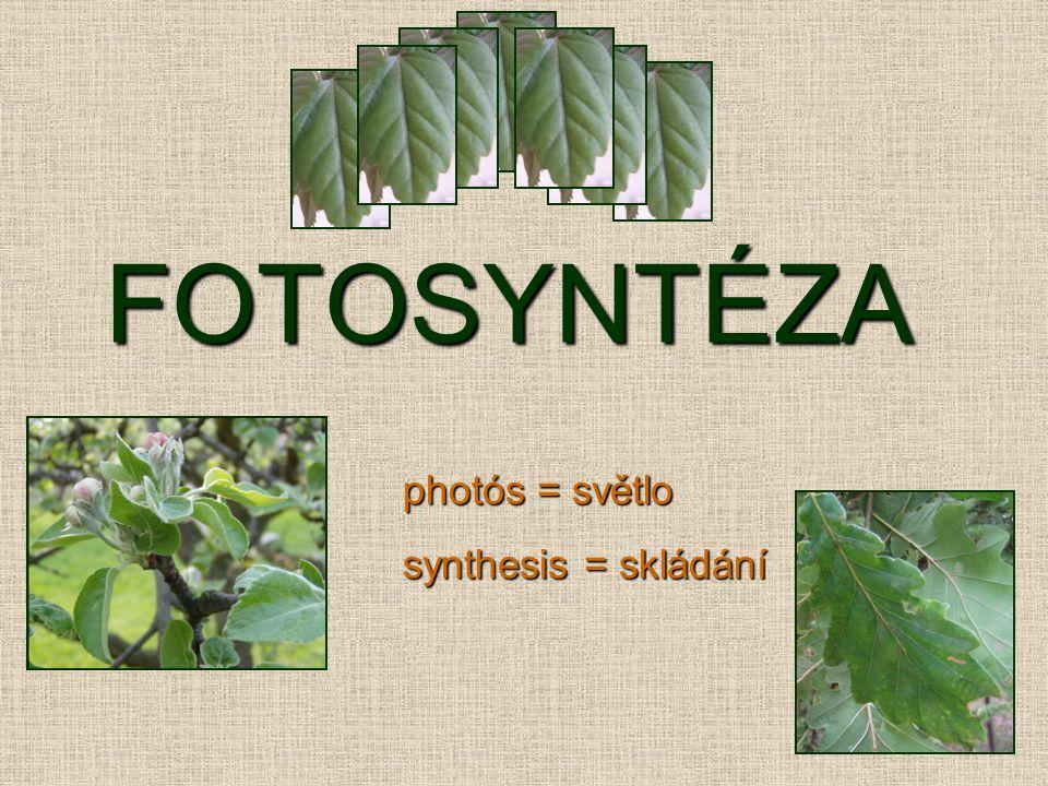 FOTOSYNTÉZA photós = světlo synthesis = skládání