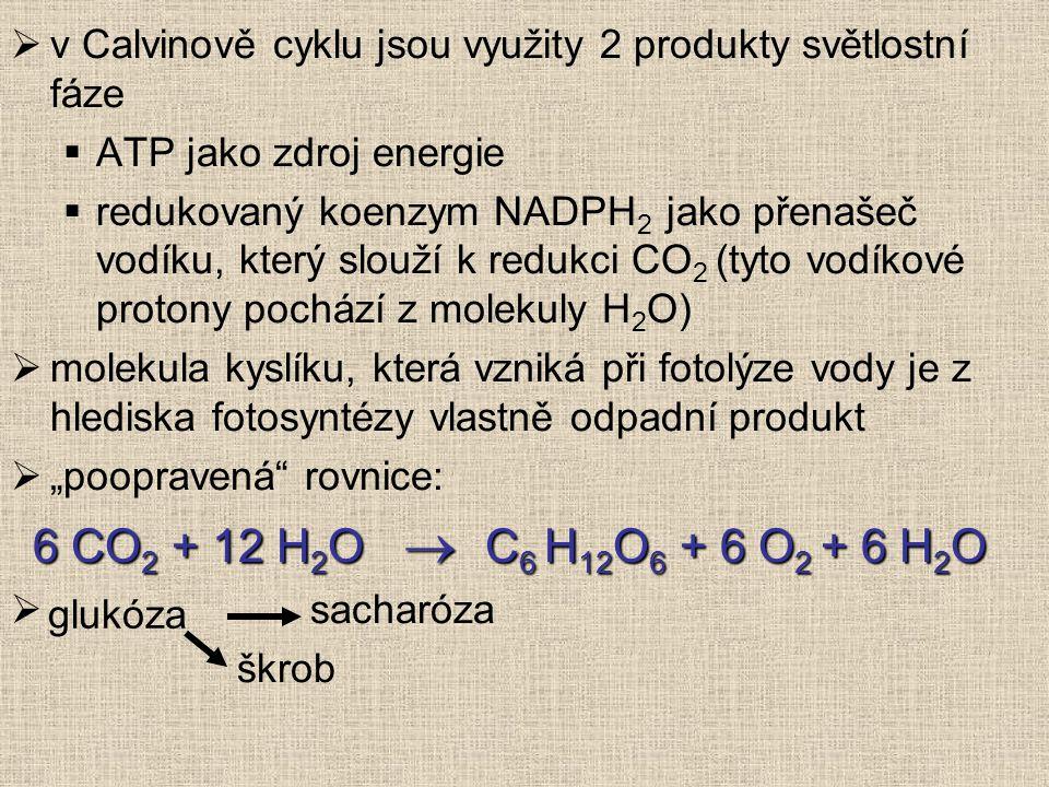 v Calvinově cyklu jsou využity 2 produkty světlostní fáze
