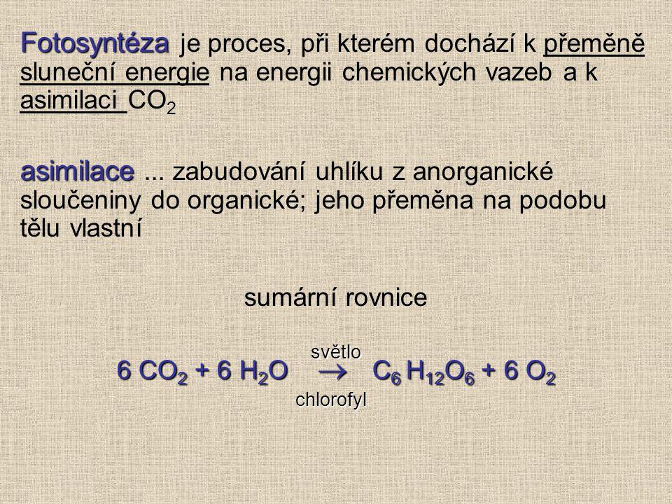 Fotosyntéza je proces, při kterém dochází k přeměně sluneční energie na energii chemických vazeb a k asimilaci CO2