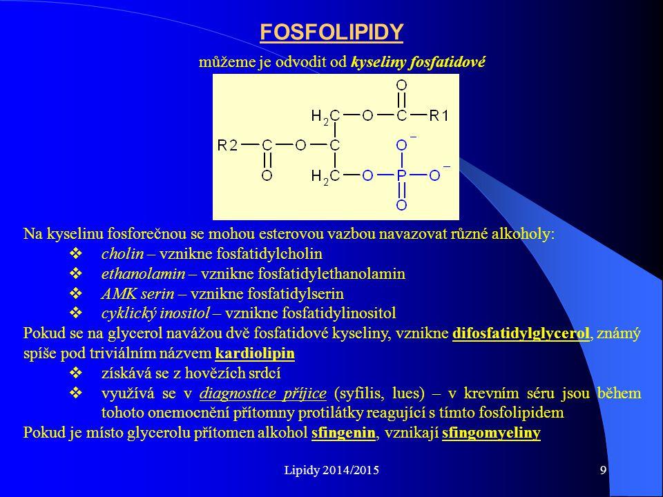 FOSFOLIPIDY můžeme je odvodit od kyseliny fosfatidové