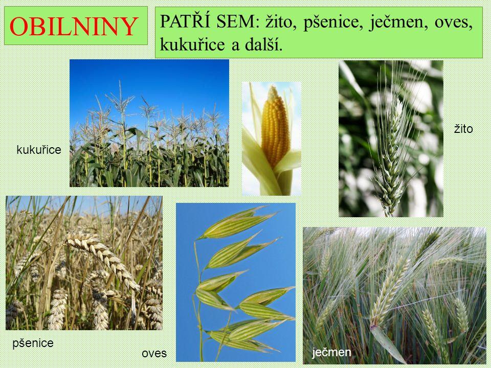 OBILNINY PATŘÍ SEM: žito, pšenice, ječmen, oves, kukuřice a další.