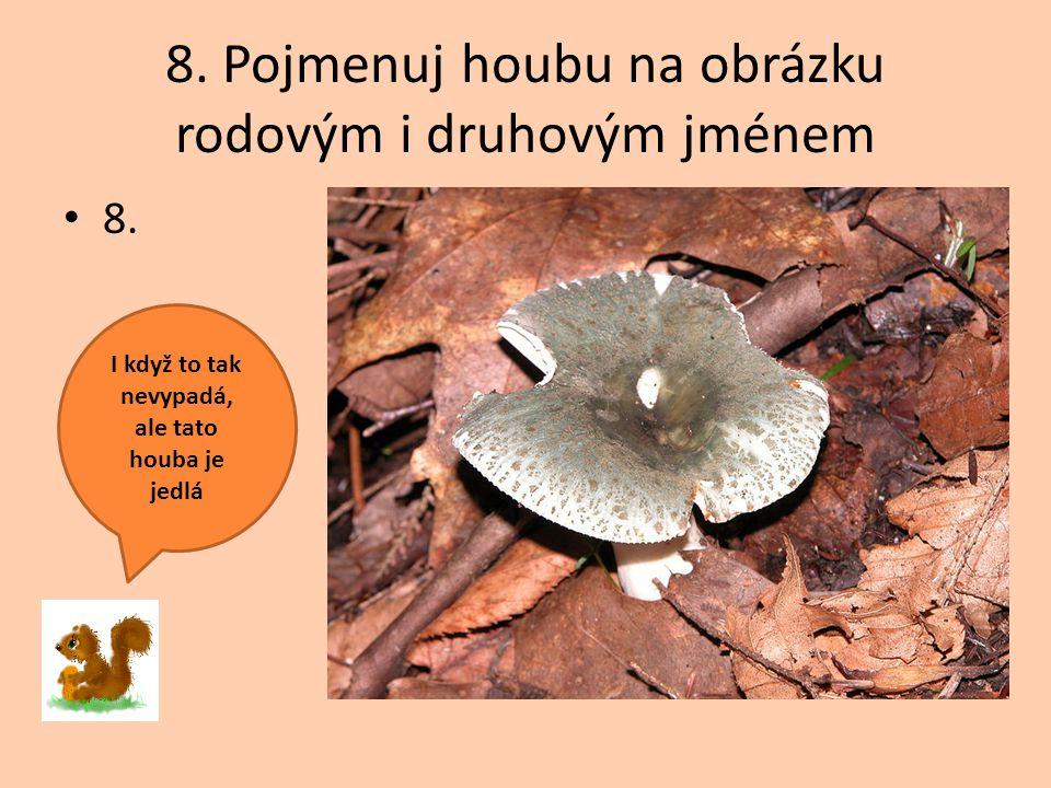 8. Pojmenuj houbu na obrázku rodovým i druhovým jménem