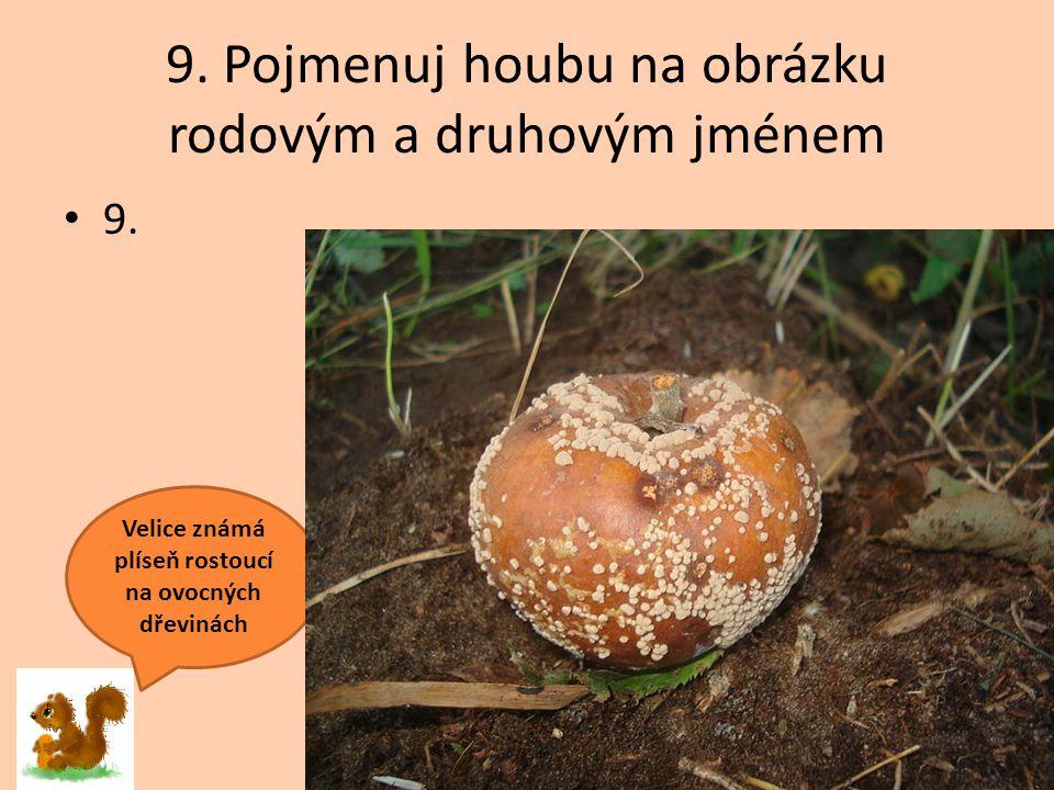 9. Pojmenuj houbu na obrázku rodovým a druhovým jménem