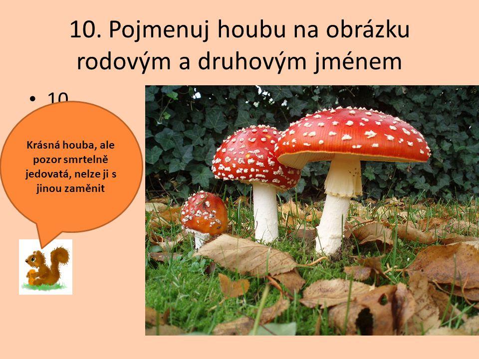 10. Pojmenuj houbu na obrázku rodovým a druhovým jménem