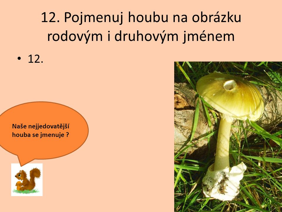 12. Pojmenuj houbu na obrázku rodovým i druhovým jménem