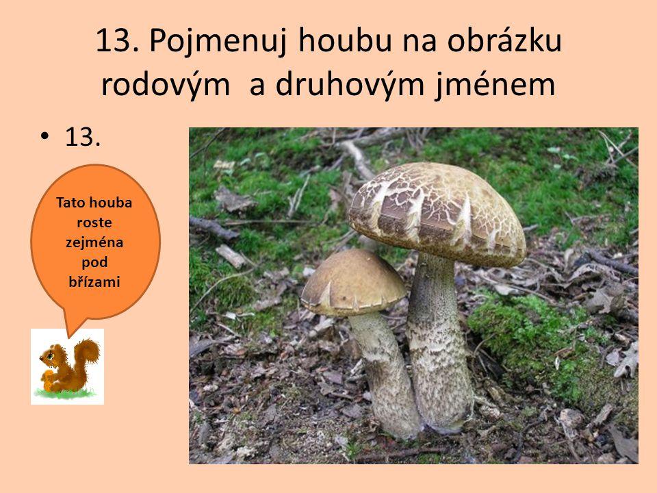 13. Pojmenuj houbu na obrázku rodovým a druhovým jménem