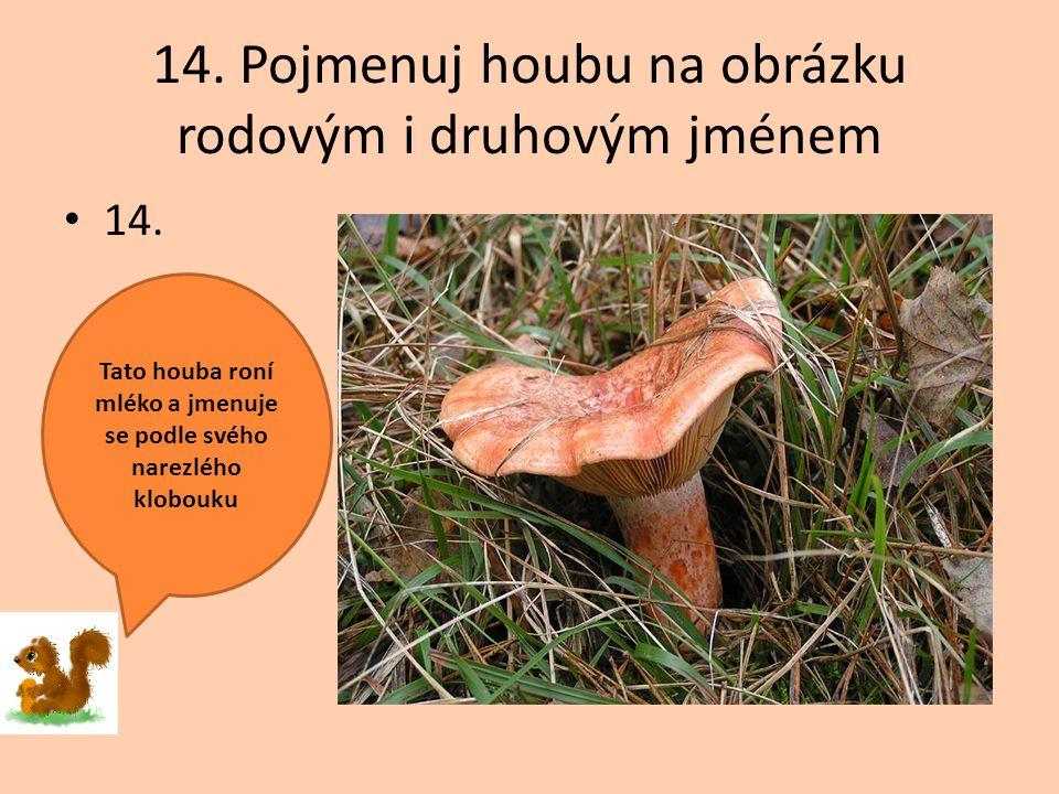 14. Pojmenuj houbu na obrázku rodovým i druhovým jménem