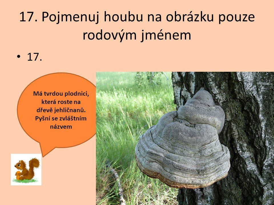 17. Pojmenuj houbu na obrázku pouze rodovým jménem