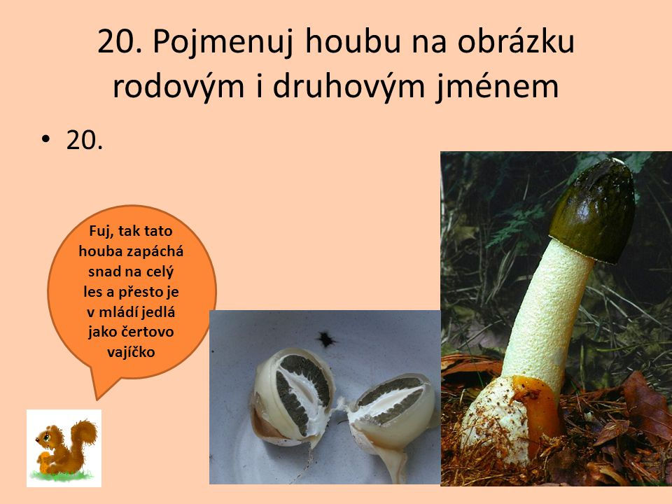 20. Pojmenuj houbu na obrázku rodovým i druhovým jménem