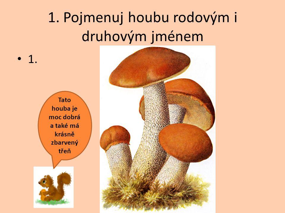 1. Pojmenuj houbu rodovým i druhovým jménem