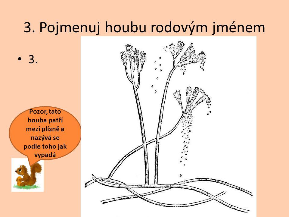 3. Pojmenuj houbu rodovým jménem