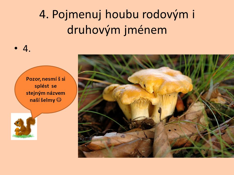 4. Pojmenuj houbu rodovým i druhovým jménem