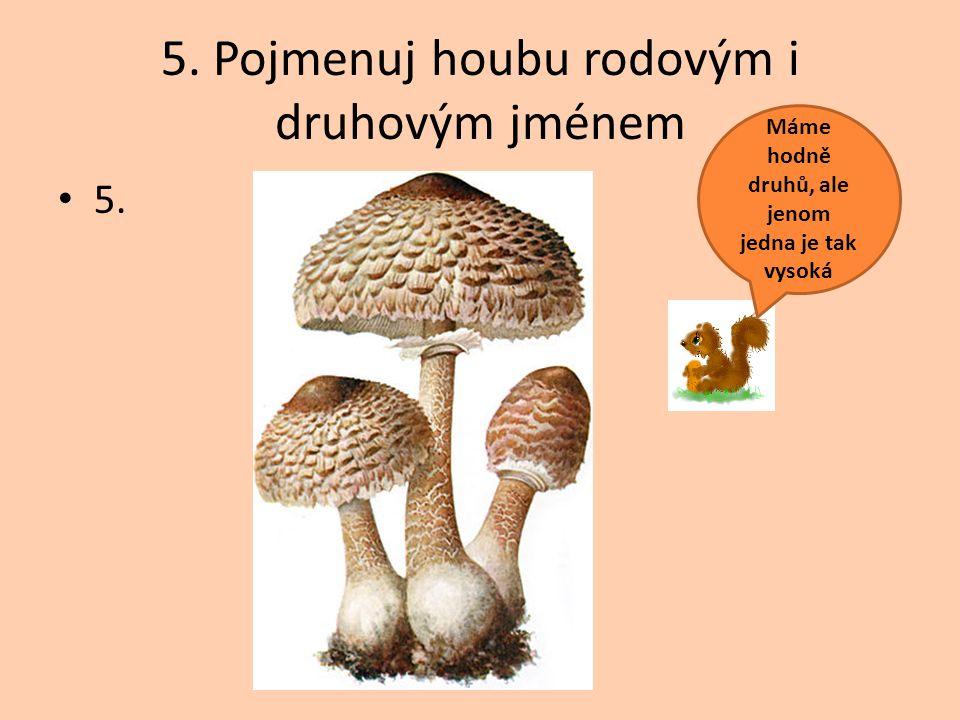5. Pojmenuj houbu rodovým i druhovým jménem