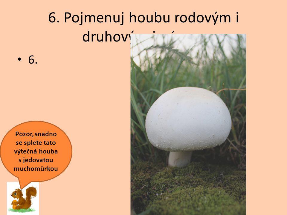 6. Pojmenuj houbu rodovým i druhovým jménem