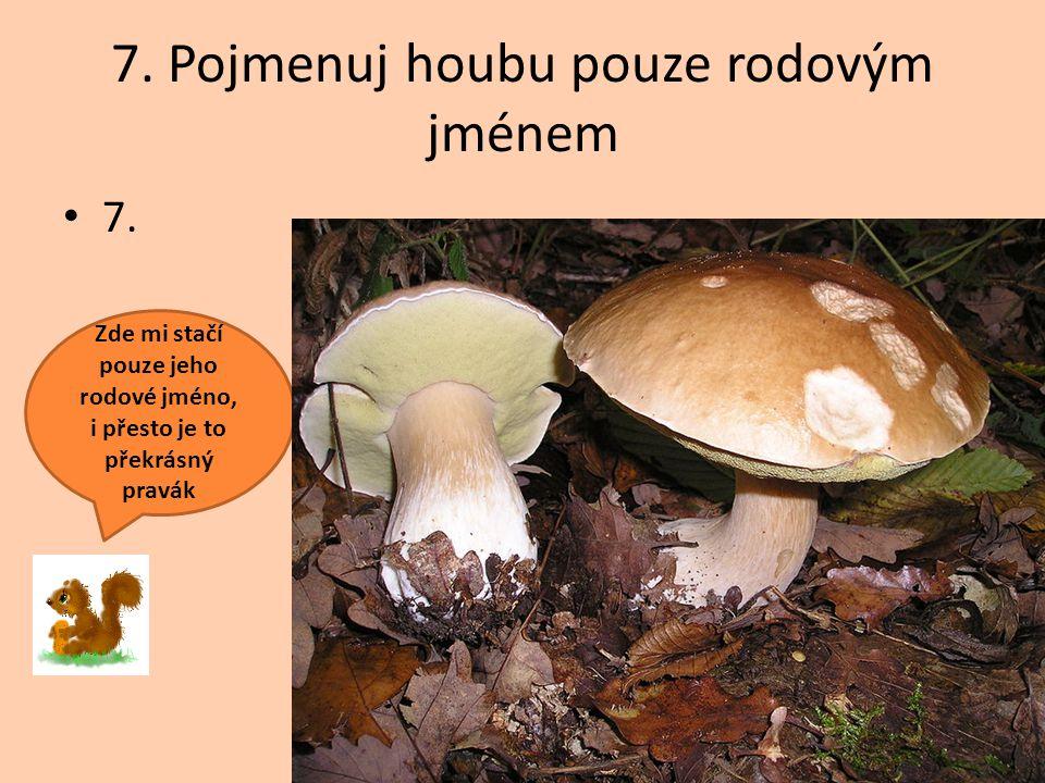 7. Pojmenuj houbu pouze rodovým jménem
