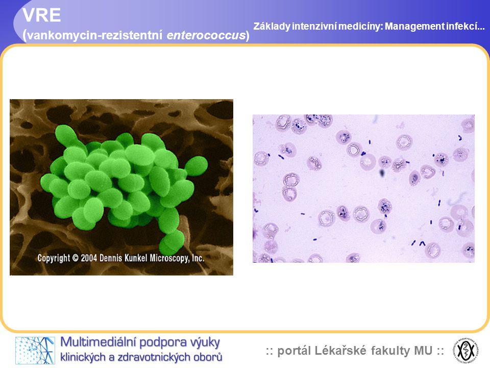 VRE (vankomycin-rezistentní enterococcus)