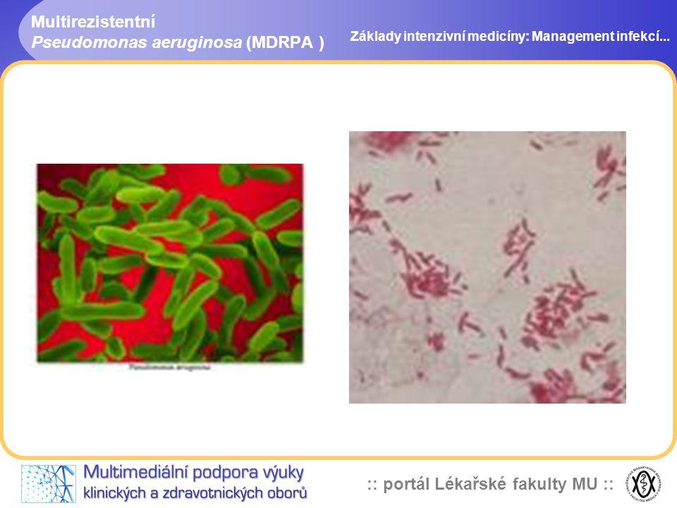 Multirezistentní Pseudomonas aeruginosa (MDRPA )
