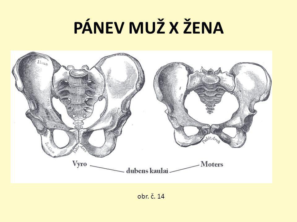 PÁNEV MUŽ X ŽENA obr. č. 14