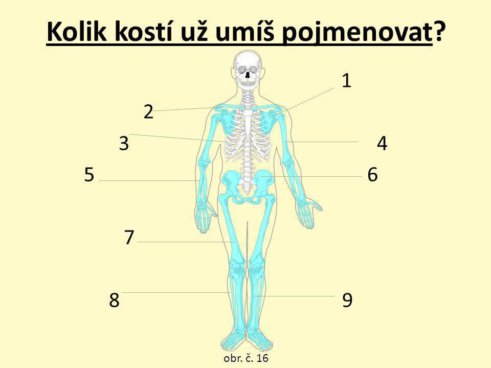 Kolik kostí už umíš pojmenovat
