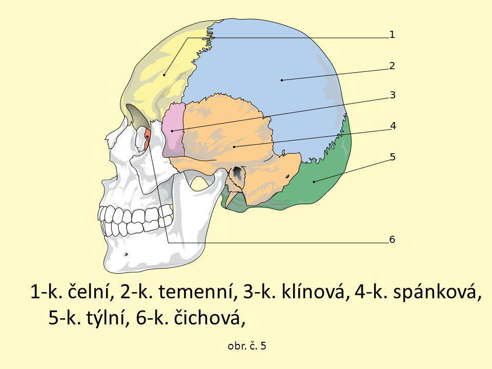 1-k. čelní, 2-k. temenní, 3-k. klínová, 4-k. spánková, 5-k. týlní, 6-k