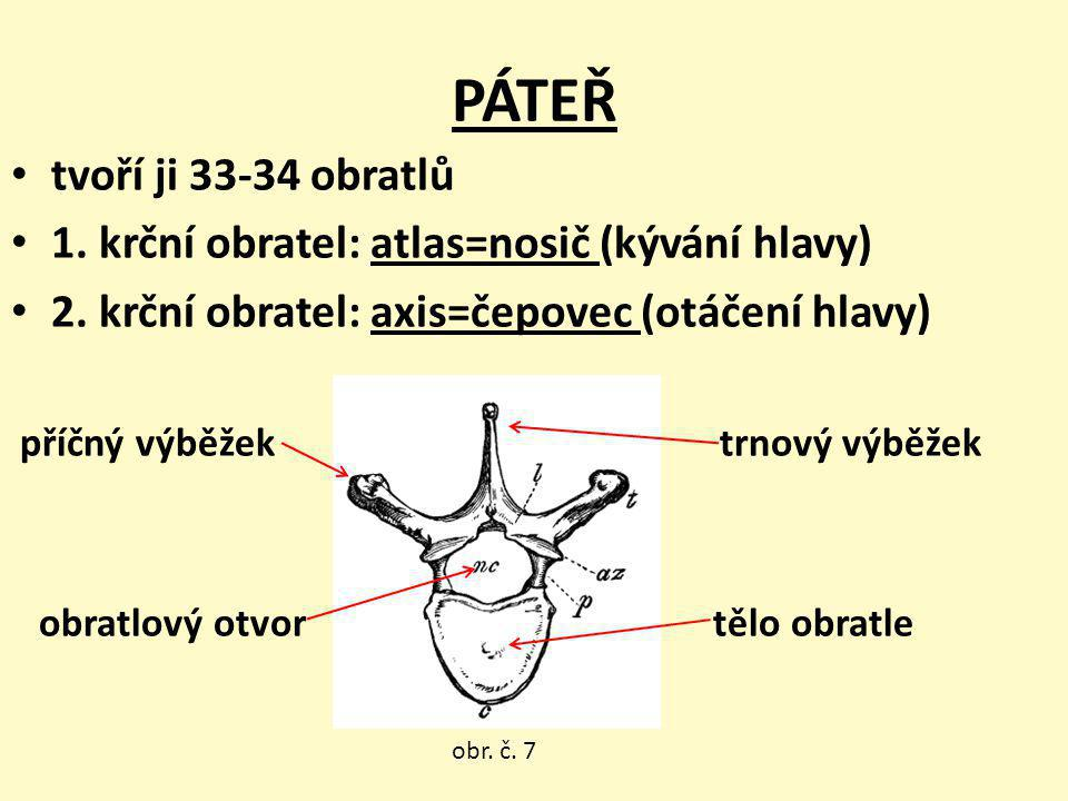 PÁTEŘ tvoří ji 33-34 obratlů