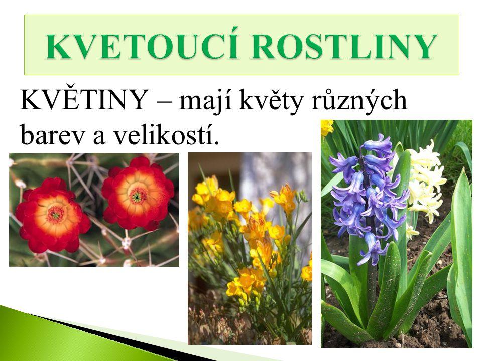 KVETOUCÍ ROSTLINY KVĚTINY – mají květy různých barev a velikostí.