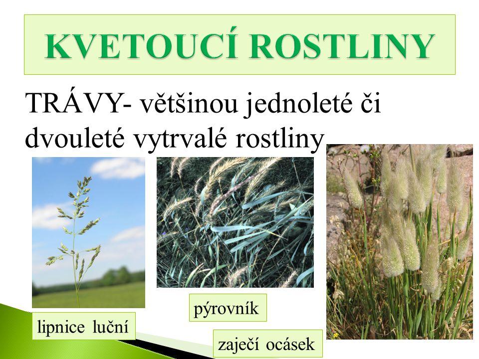 KVETOUCÍ ROSTLINY TRÁVY- většinou jednoleté či dvouleté vytrvalé rostliny. pýrovník. lipnice luční.