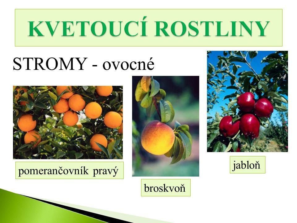 KVETOUCÍ ROSTLINY STROMY - ovocné jabloň pomerančovník pravý broskvoň