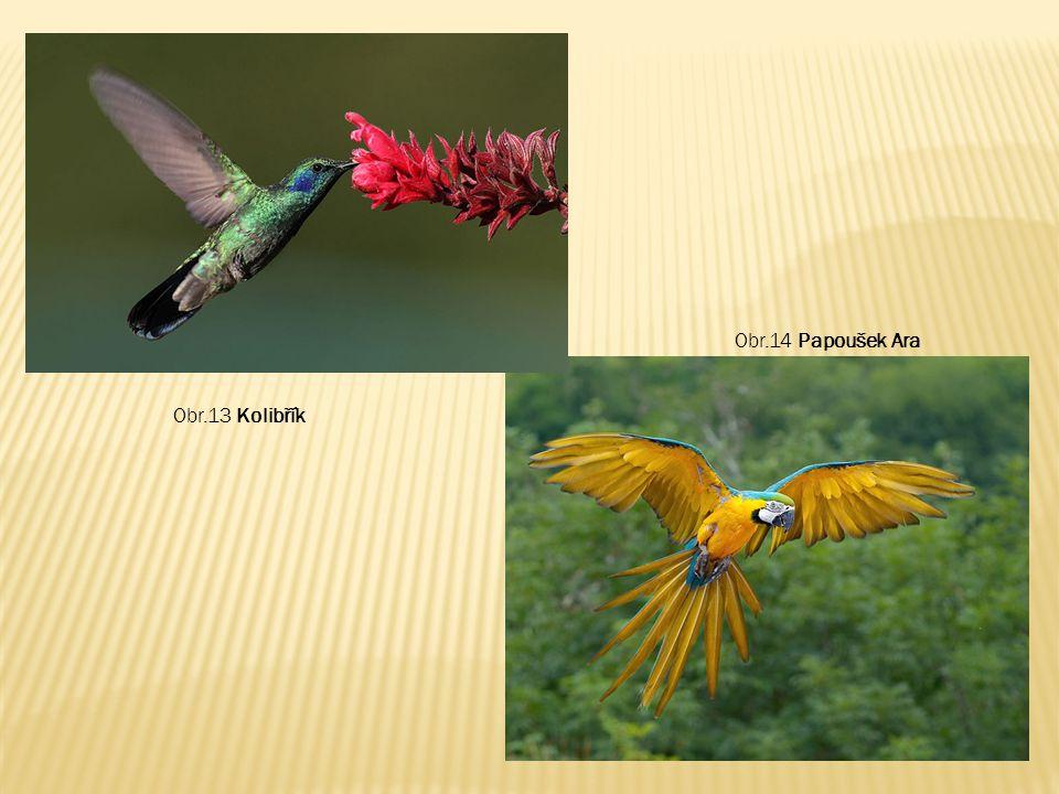 Obr.14 Papoušek Ara Obr.13 Kolibřík
