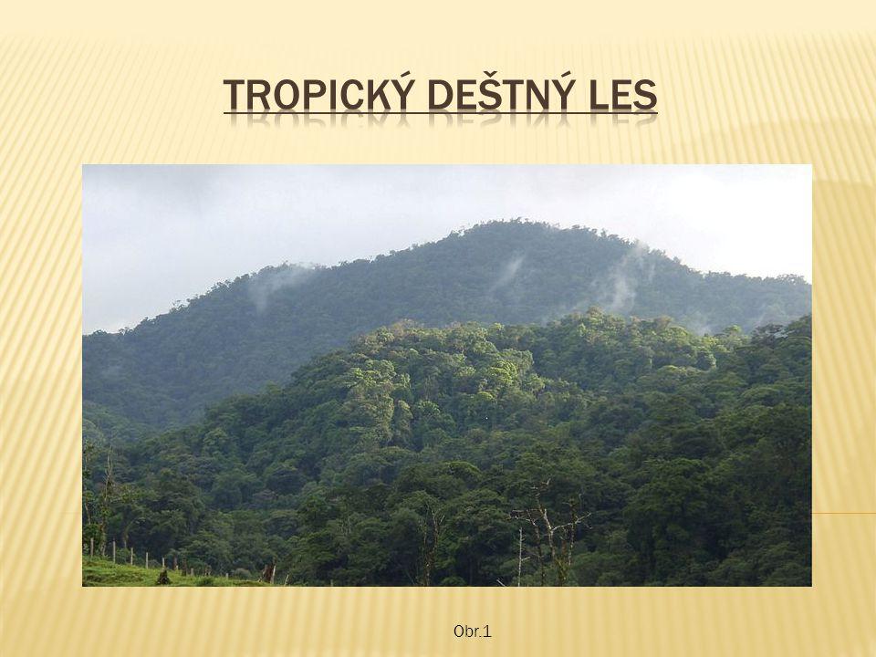 Tropický deštný les Obr.1